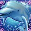 Dolphin Reef online